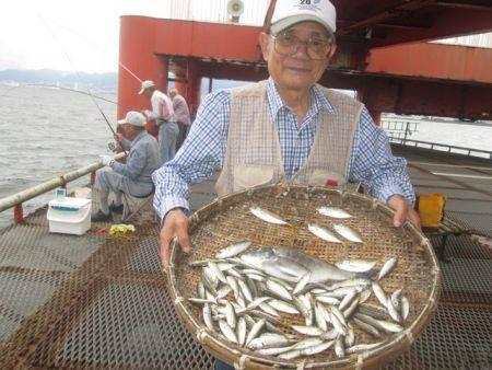 尼崎市立魚つり公園 アジ・サバ連日好調