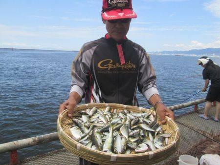サビキで豆アジ超大漁!尼崎市立魚つり公園