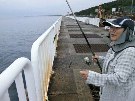 大阪南港海釣り公園 アジ、サバ