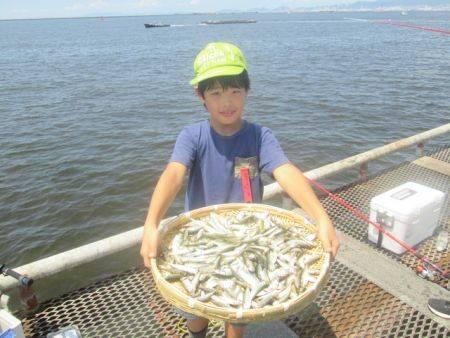 尼崎市立魚つり公園 連日豆アジ好調