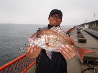 神戸市立平磯海づり公園 ウキ釣りでマダイ