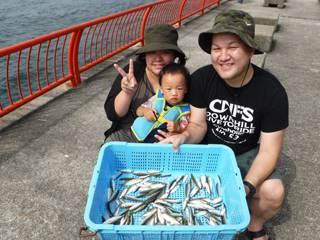 須磨海釣公園 サビキでアジ140尾
