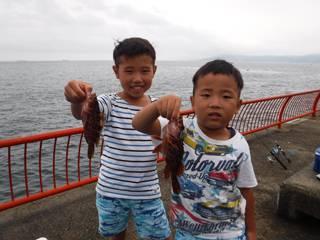 神戸市立平磯海づり公園 アコウ、ガシラ、ベラ