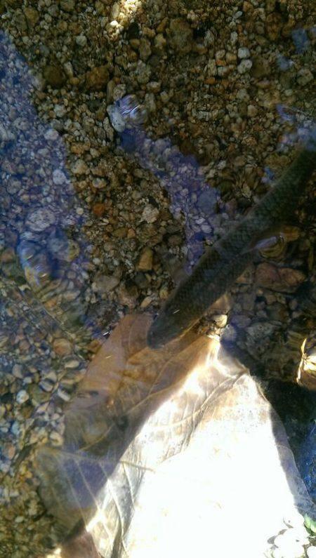久しぶりの渓流釣り