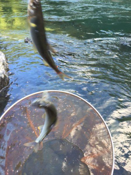 夏はアユ釣りに限る!