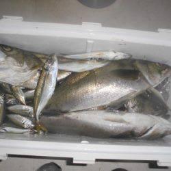 ルアー船マヒマヒ 釣果
