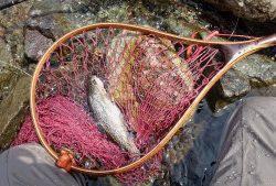 会津大川(会津非出資漁業協同組合) 釣果