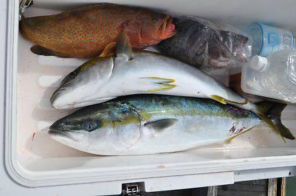 八海丸 釣果