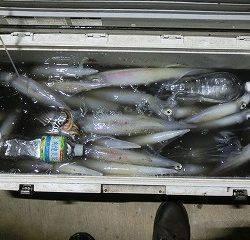 第二清洋丸 釣果