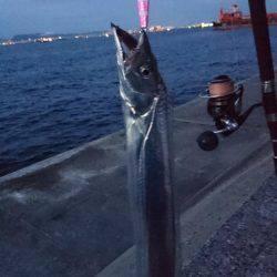 風のち太刀魚