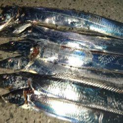 太刀魚&アコウ