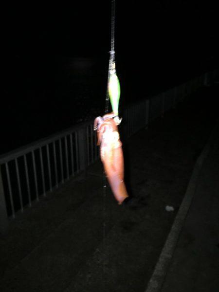久々のイカ釣り