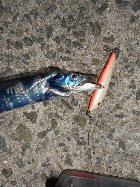 沖堤太刀魚*\\(^o^)/*