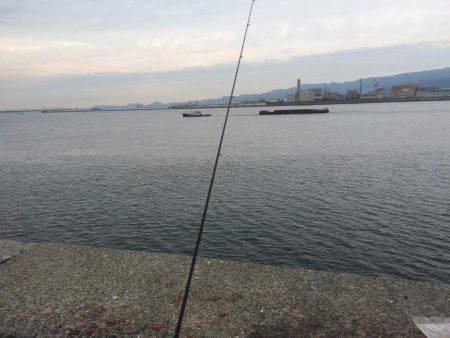 サヨリ釣り