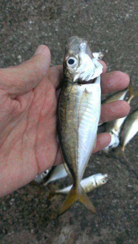 タチウオ釣りがアジ釣りに