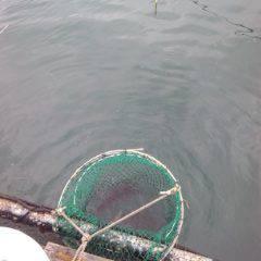 海上釣り堀岬でかんぱチねらい