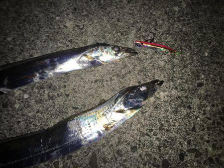 太刀魚*\\(^o^)/*