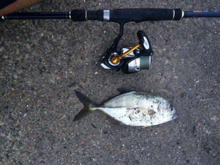 メッキと珍しい魚