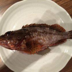 小さな高級魚 タカベ