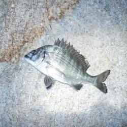 夕方~エビ撒き釣りで根魚
