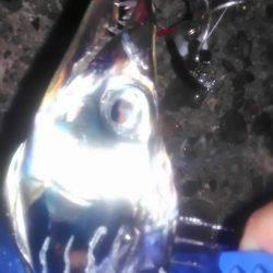 太刀魚爆釣‼
