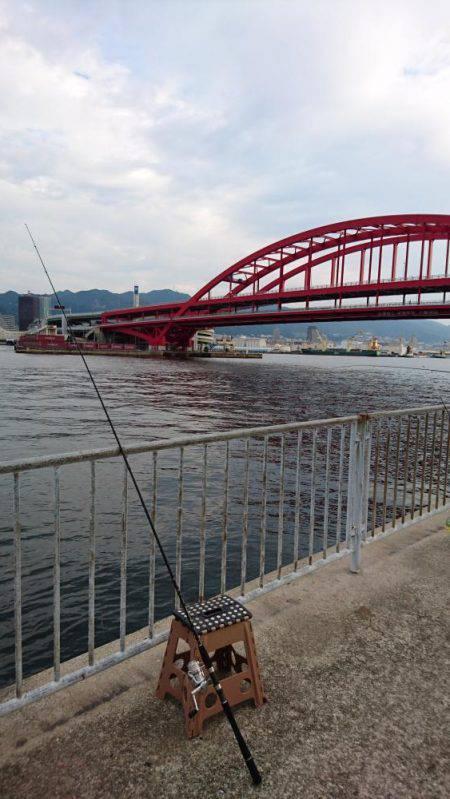 北公園サビキ継続的に釣れてます