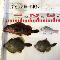 久々餌釣り
