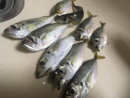 魚種が豊富な1時間❗️