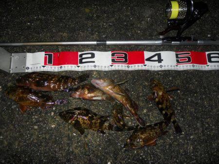 夕方~夜、エビ撒き釣りで根魚