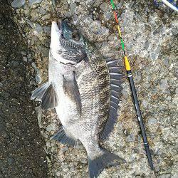 南芦屋浜チヌ釣り