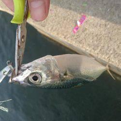 太刀魚×サバ◎