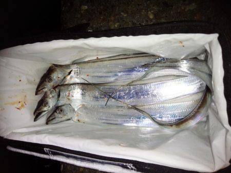太刀魚調査