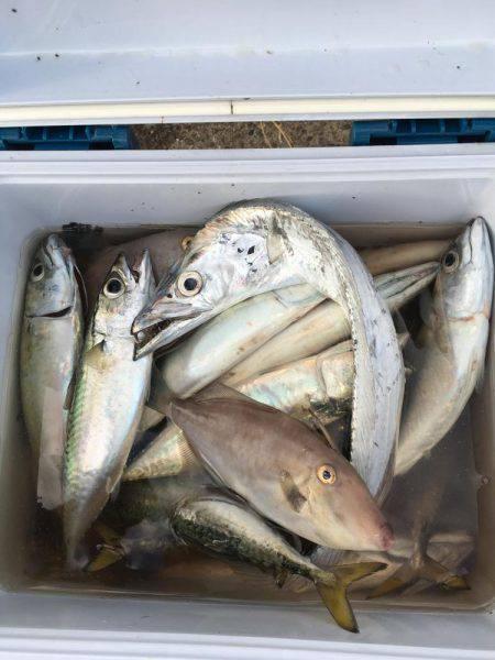 ハシゴ釣り