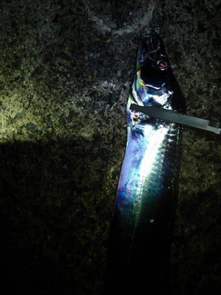 台風後の釣り