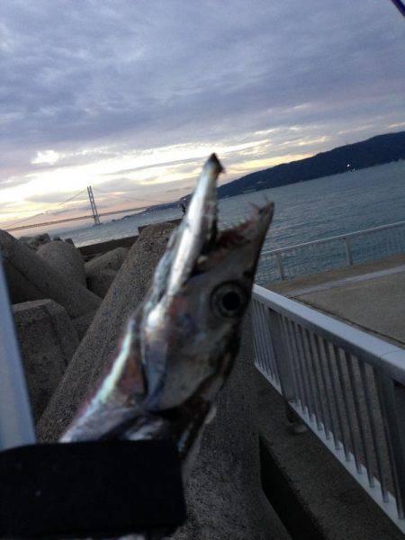 夕マヅメより朝マヅメ釣行