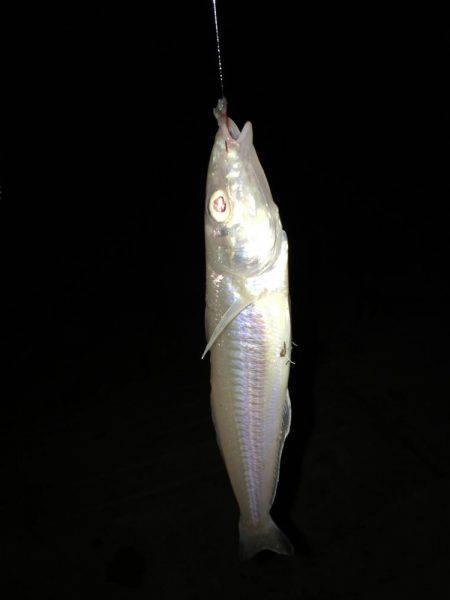 二反田で夜釣り