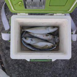 さびき釣り