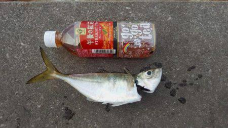 久々のタチウオ釣行