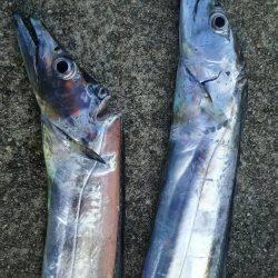 タチウオ釣行