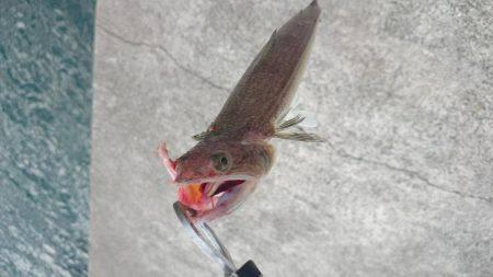 いろいろ釣れる!