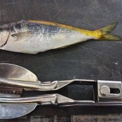 コアジ釣り