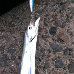 早朝の太刀魚釣り