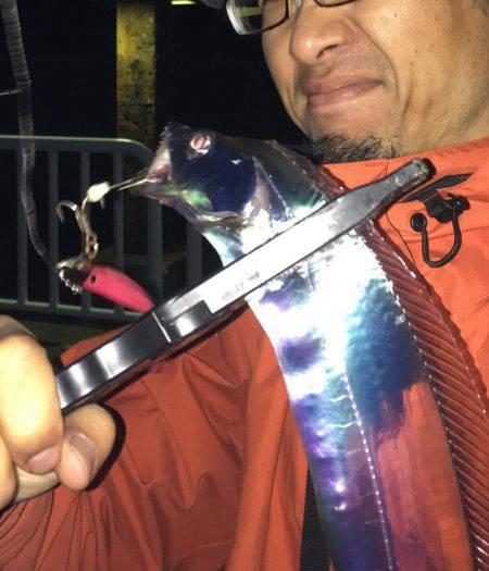 リベンジ太刀魚
