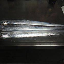 太刀魚ゲット・・・・・