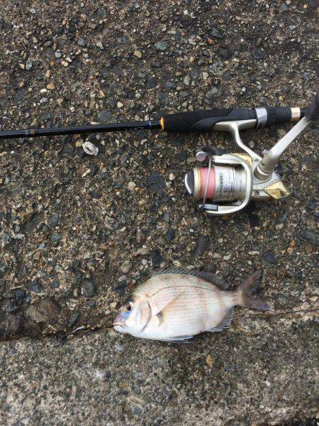 たくさん釣れました!