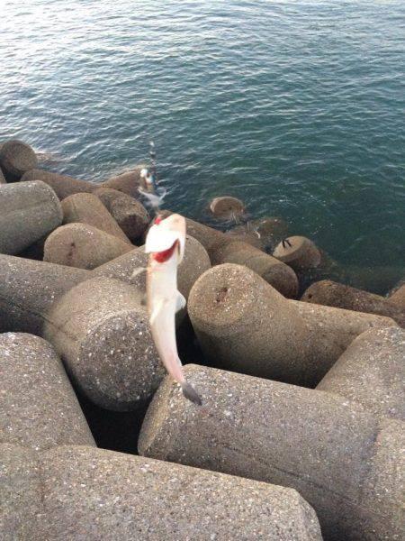 朝マヅメ東二見人工島釣行