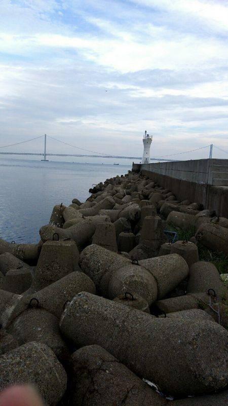 台風前に明石港にて生態調査