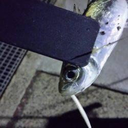 久々一人釣行