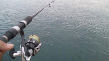 初イカ釣り