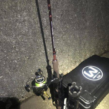 どこでも釣れる。